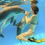 Bagno con i delfini | Consentito per progetti educazione ambientale
